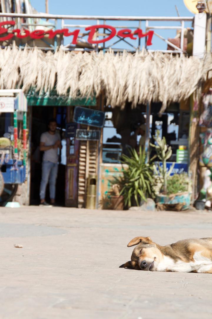 Dog sleep in Dahab on Market