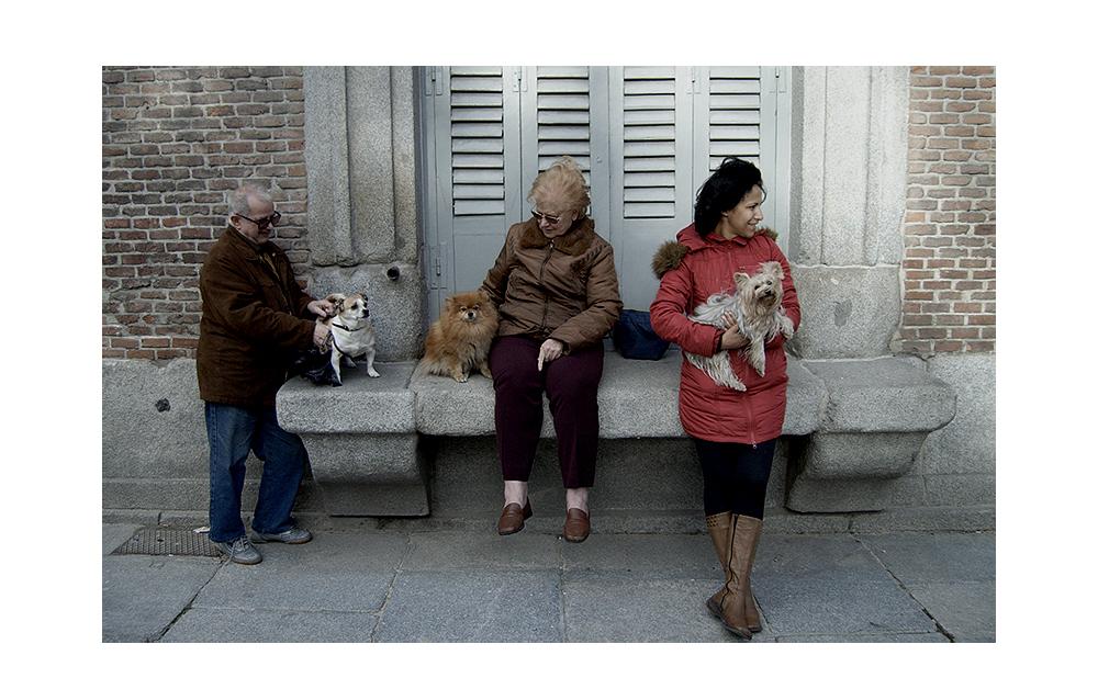 Dog Streetlife