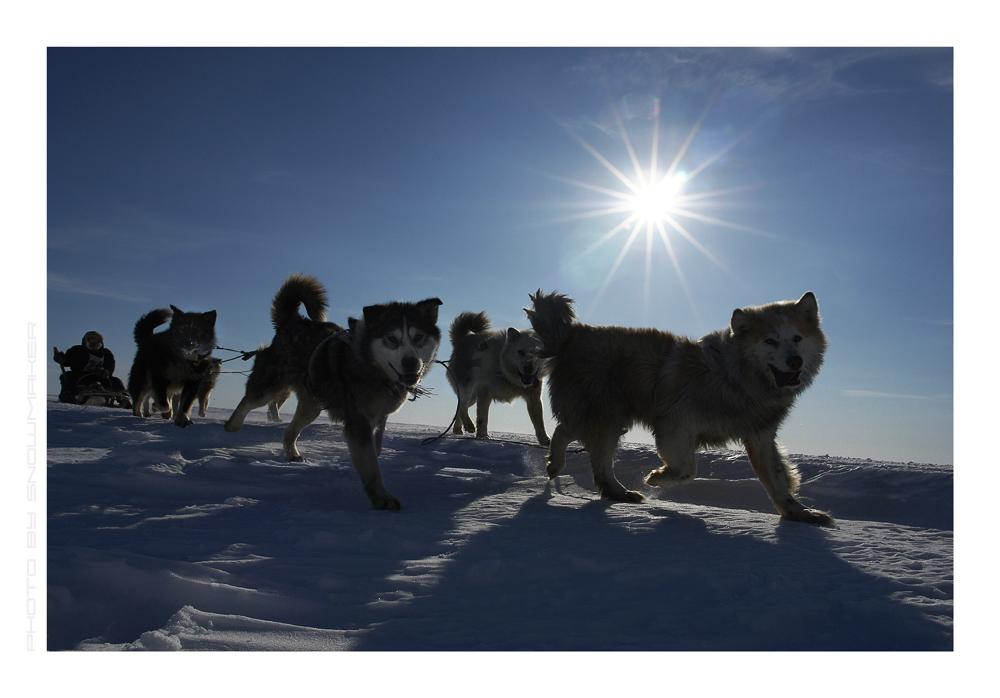 Dog team.