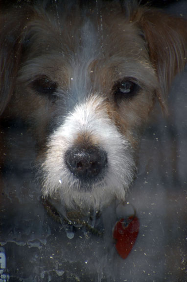 Dog Under Glass