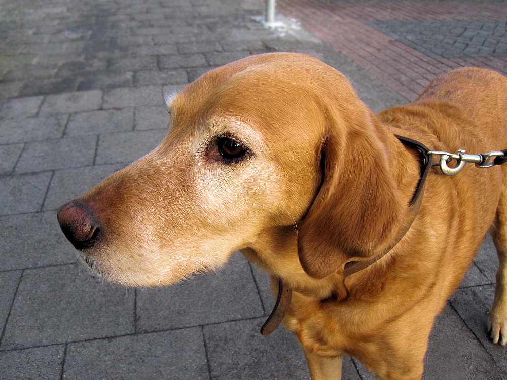 Dog waits for his master