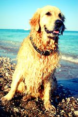 dog weather