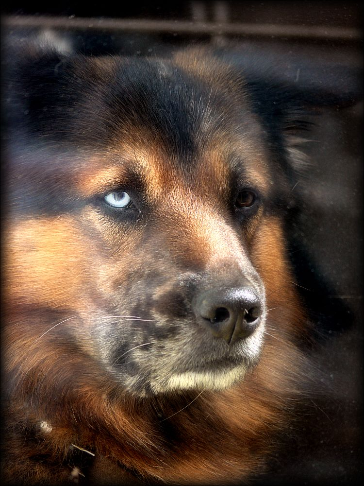 Dog with magical eyes