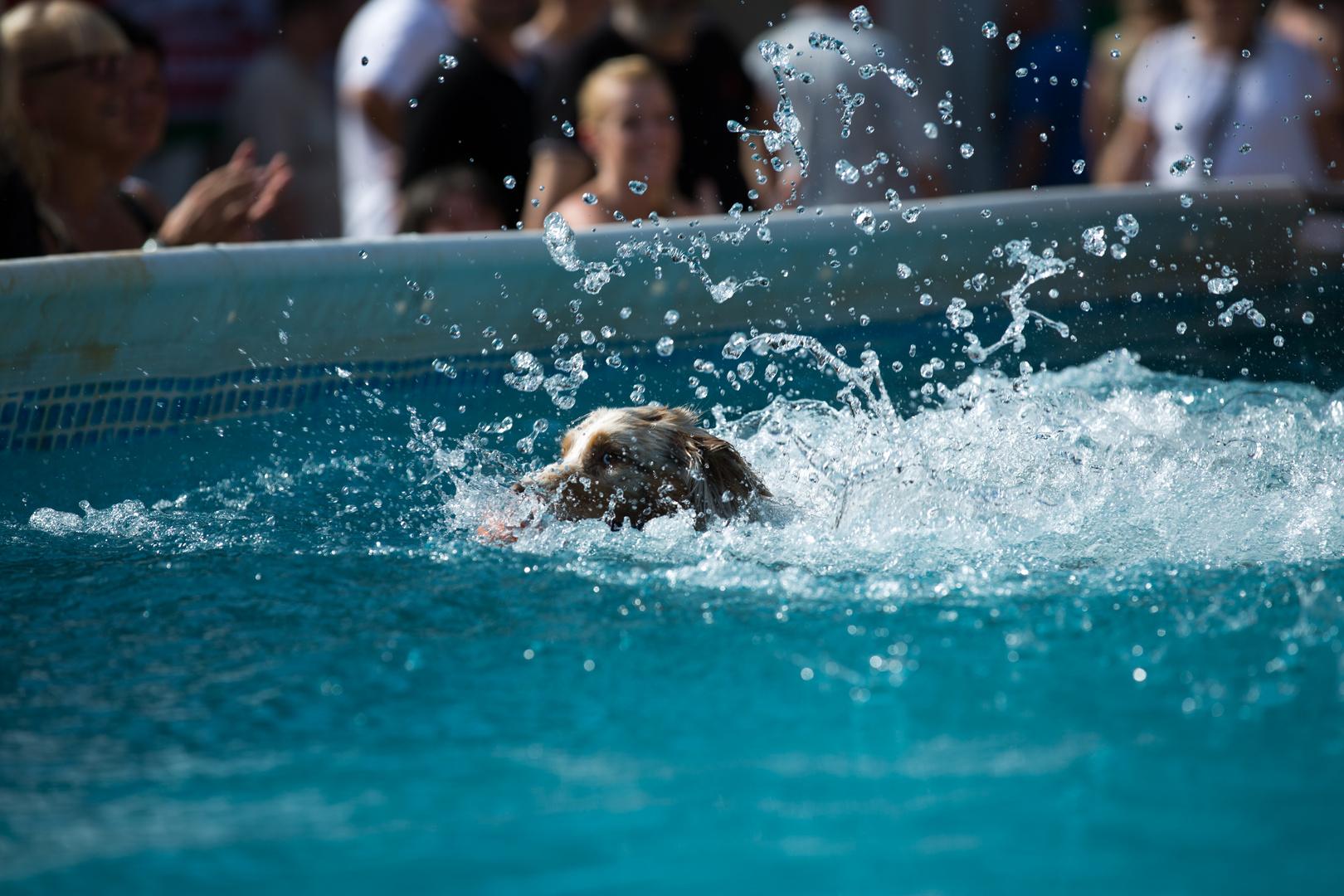 DogCologne 2012 #3