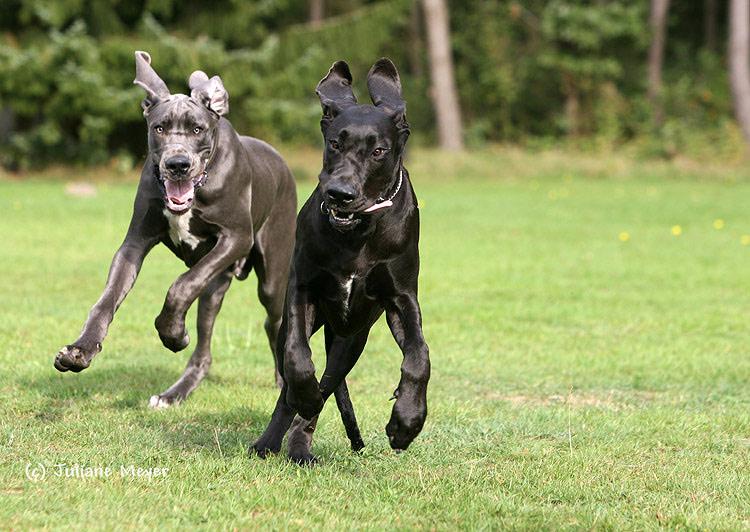 Doggenpower