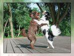 doggie dancing