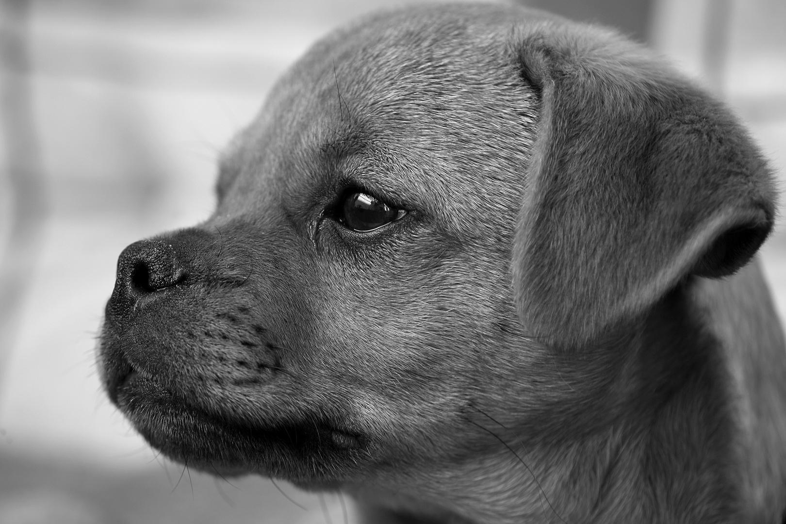 Doggy....