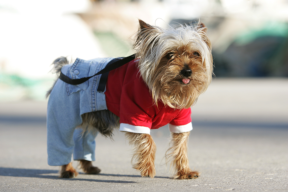 doggy-style