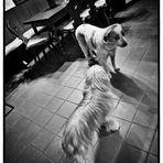 Doggy Walk #6