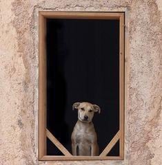 DOG....IN FRAME.....