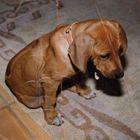 Dogs are sad too