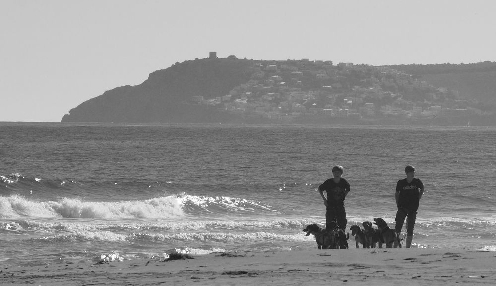 Dogs at the Beach 002