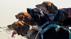 Dogs at the Beach 007