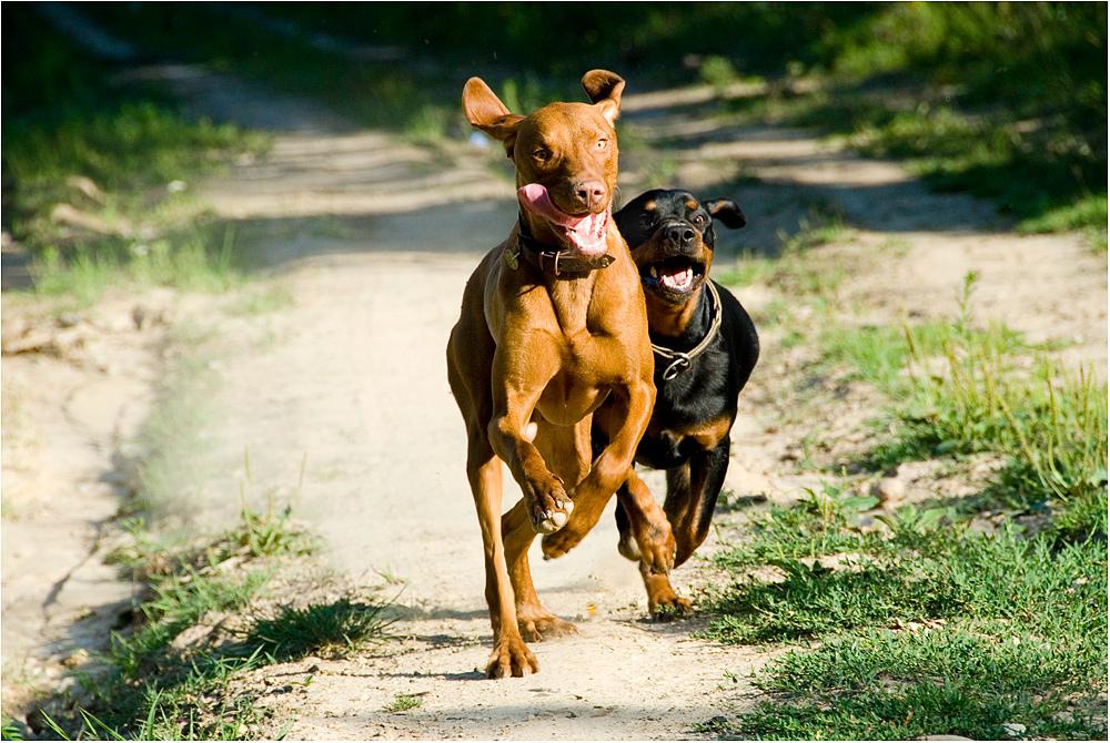 >dogs II