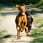 >dogs II<