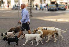 Dogsitter in Neapel