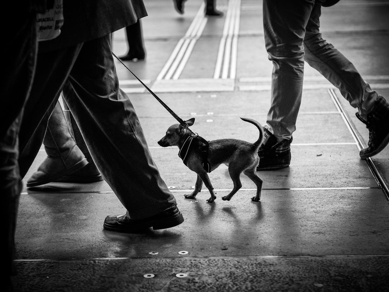 dog.walk