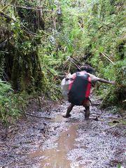 Doku Bergregenwald Irian Jaya 2