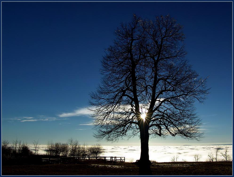 Dolmar-Sonne