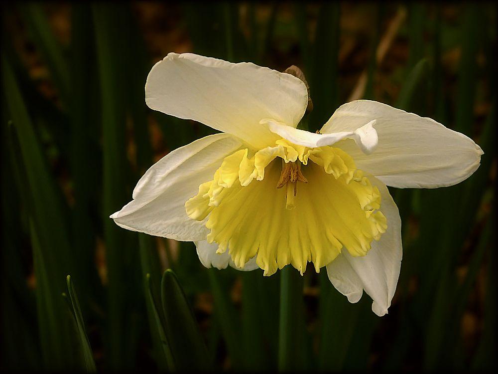 Dolorous flower