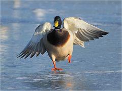 Donald der Eisläufer