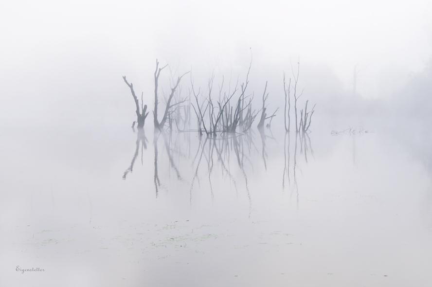 Donau-Altwasser im Nebel
