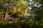 Donauauen Herbstfarben 2014