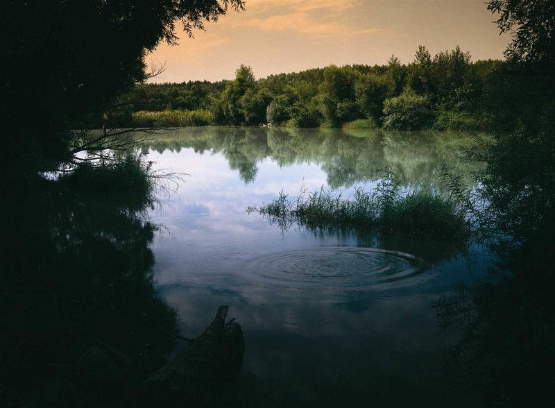 Donaustilleben
