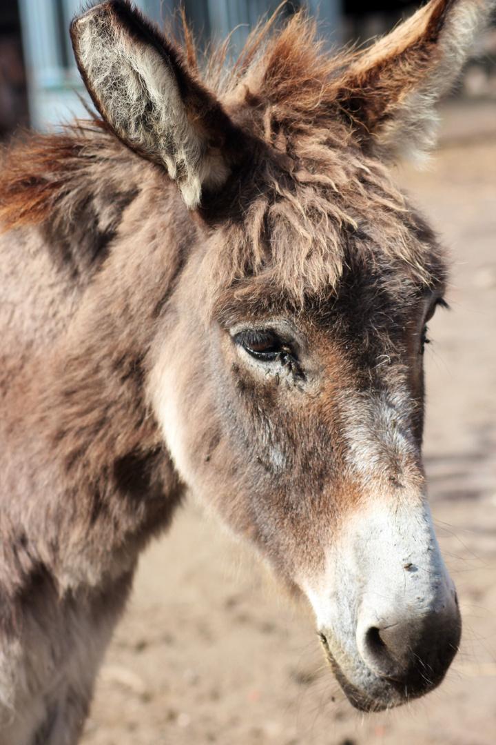 Donkey.
