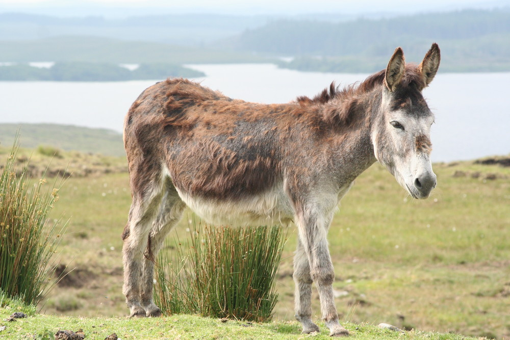 Donkey im Nationalpark