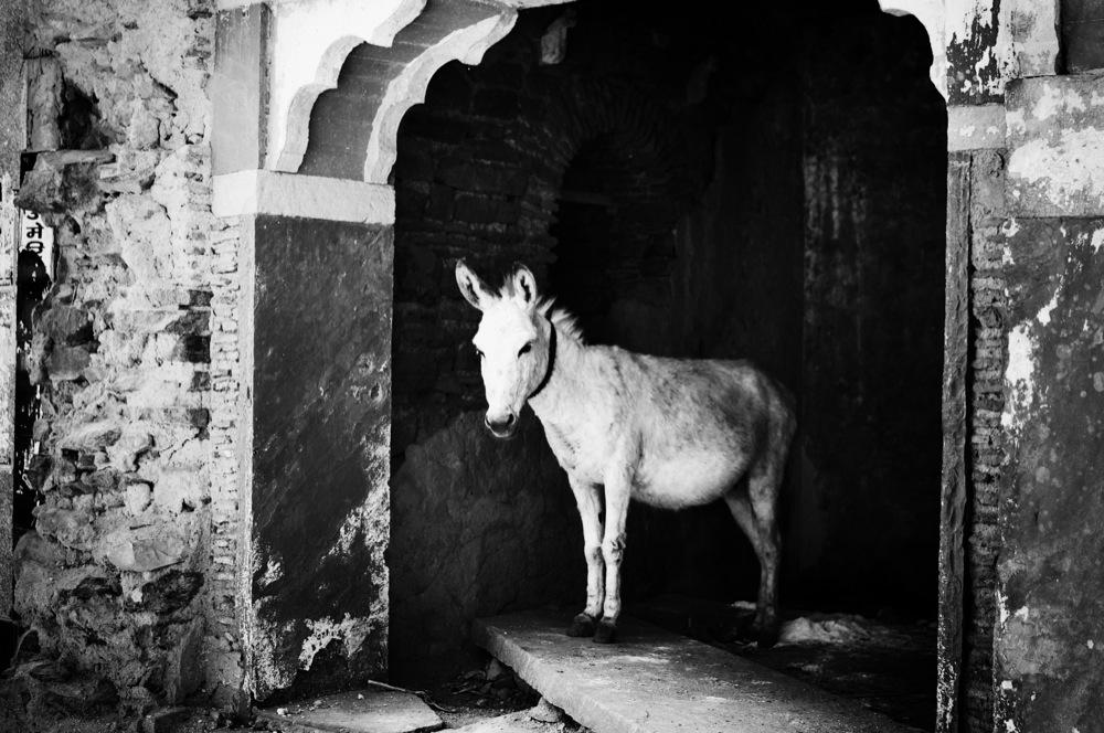Donkey Princess