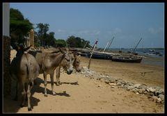 ... Donkey Town II ...