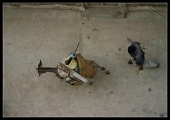 ... Donkey Town, Lamu, Kenya ...