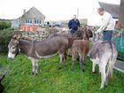 donkey's in mayo