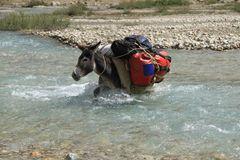 Donkeys of the Pamir II