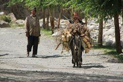 Donkeys of the Pamir VII