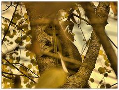Donnerstag mit Durchblick- Dunkles Hörnchen