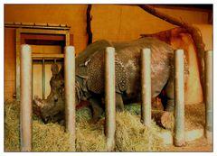 Donnerstag mit Durchblick- Nashorn