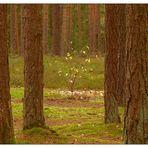 Donnerstag mit Durchblick- Strauch hinter den Bäumen