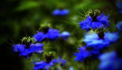 Donnerstagblumen