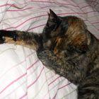 Don't disturb my beauty sleep!