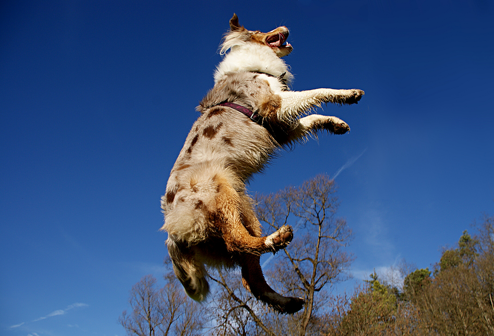 Don't tell me dogs can't fly...