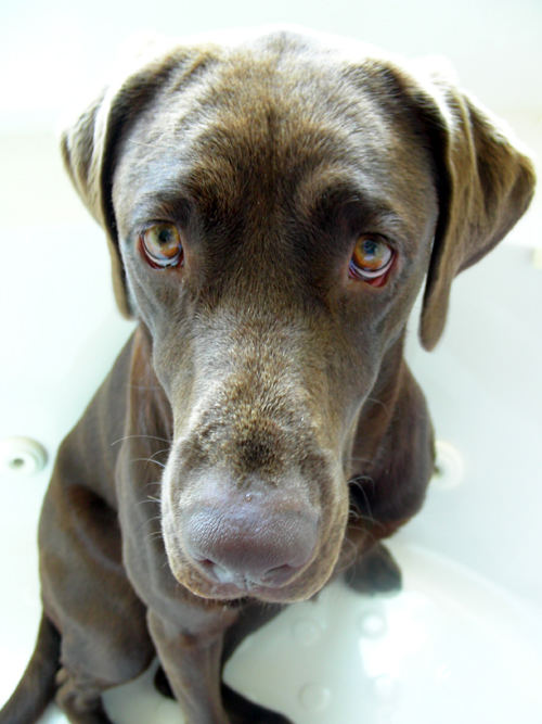 Dont Wanna Take a Bath