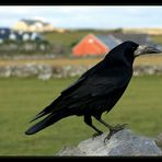 Doolin Raven