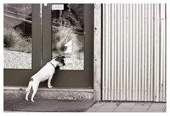 Door Keeper