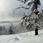 Dopo la nevicata
