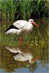Doppel-Storch