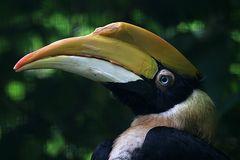 Doppelhorn Vogel