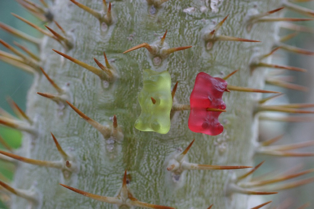 Doppelmord im Botanischen Garten Berlin