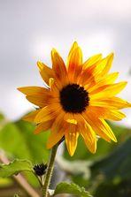 Doppelte Herbst-Sonne!